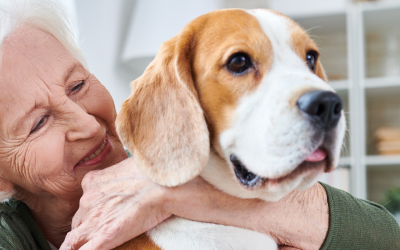 Renting a home when you have pets